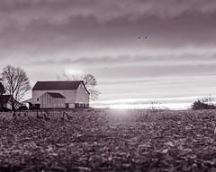 DSC_8658-2 (louis_mancuso) Tags: winter sunset field geese twilight corn cornfield pennsylvania farm goose pa newtown goldenhour yardley newtownpa flyingsouth newtownpennsylvania geeseflyingsouth shadybrookfarm yardleypa yardleypennsylvania winter2015 shadybrookfarmyardleypa shadybrookfarmyardley gooseflyingsouth