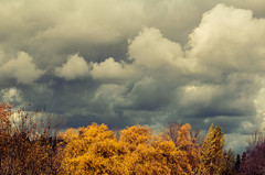 Fall Storm Moving In (A Great Capture) Tags: autumn trees sky cloud toronto ontario canada storm fall leaves yellow clouds forest rouge golden woods photographer cloudy outdoor ominous canadian valley on agc ald ash2276 adjm ashleylduffus wwwagreatcapturecom agreatcapture