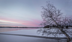 Gravity (Jyrki Liikanen) Tags: sky tree landscape frozen nikon december outdoor frosty birch icy icebound icecrack jyrkiliikanen