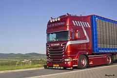 "Scania R Streamline Topline "" TIJS DE KONING "" (NL) (magicv8m) Tags: transport r nl trans livestock scania streamline lkw tir topline tijsdekoning"