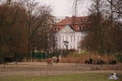 Tierpark Berlin 26.12.2017 110 (Fruehlingsstern) Tags: eisbär polarbear wolodja rothund nashorn stachelschwein tierparkberlin canoneos750 tamron16300