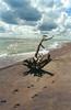 1985-09-00 Kanada (122) Lake Erie (Scan vom Negativ) (mike.bulter) Tags: baumstamm beach can canada cloud clouds eriesee kanada lakeerie stamm strand treetrunk wolke wolken