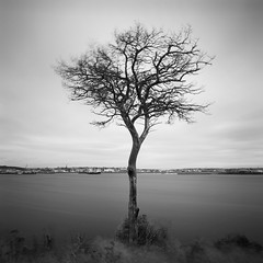 Tree by Stornoway (Mark Rowell) Tags: stornoway isleoflewis scotland deadtree le longexposure weldingglass fuji acros bw mediumformat 6x6 120 film