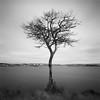 Tree by Stornoway (Mark Rowell) Tags: stornoway isleoflewis scotland deadtree le longexposure weldingglass fuji acros bw mediumformat 6x6 120 film