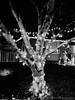 xmas_07677 (EYEsnap_Photography) Tags: tree lights christmas christmaslights blackandwhite livermore