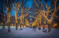 LITES ABLAZE (jlucierphoto) Tags: christmas lites boston massachusetts commontree holiday outdoor tree plant snow