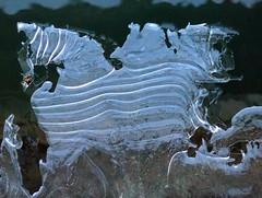 DENTELLE de GLACE. (Chevaux) (dominique jacquier) Tags: gel hiver dessin glace cheval