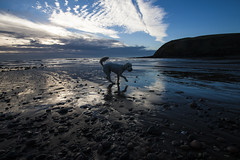 170129 St Bees 04 (John - Nash) Tags: st bees stbees cumbria westcumbria lakedistrict beach sky cloud blue white before sunsrise landscape seascape beachscape sea water waves foam wideangle canon dog labradoodle bouncing excited