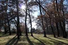 outside at Longwood Gardens (tcd123usa) Tags: longwoodgardens pennsylvania leicadlux4 winter2017