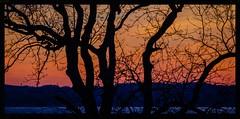 "Detail of ""my"" tree (frankmh) Tags: sunset tree detail hittarp skåne sweden öresund denmark outdoor"
