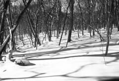 Forest in Iwamizawa park (threepinner) Tags: kodak microfilm imagelink hq selfdeveloped pentax mzm rikenon 28mm f28 iwamizawa tonebetsu forest woods winter snow hokkaidou hokkaido northernjapan japan 岩見沢 北海道 北日本 日本 利根別原生林 岩見沢公園 mountainsnaps