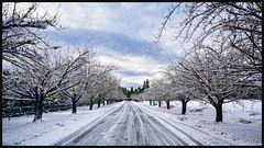 When snow falls, nature listens... (spetersonphotography ★★Happy New Year!★★) Tags: snowfall snow winter scenery snowflakes trees nature pittmeadows pittpoulder pittmeadowsgolfcourse britishcolumbia canada landscape snowylandscape outdoors nikond5200 nikon