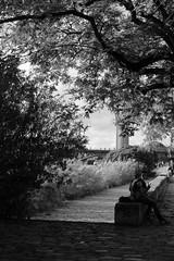 pace (micky_maz) Tags: blackandwhite foto friends monochrome tree siviglia sevilla luceombre lightanddark blancoynegro stealedshot