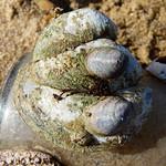 Multi-snail pile-up thumbnail