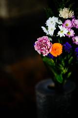 Simplicity - Flower (H.H. Mahal Alysheba) Tags: flower snapshot chrysanthemum japan nikon d800 afs nikkor 105mmf14