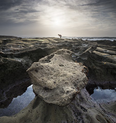 san diego : hospitals reef (William Dunigan) Tags: san diego hospitals reef la jolla southern california seascape color photography beach ocean sea shorline shore coast sunset afternoon clouds rock formation geology nikon d800