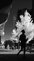 F_DSC7446-BW-IR Photography-Nikon D90-Nikkor 16-85mm-May Lee 廖藹淳 (May-margy) Tags: maymargy quarterto6pm bw 黑白 人像 剪影 紅外線攝影 街拍 streetviewphotography 線條造型與光影 linesformandlightandshadows 大樓 fdsc7446bw irphotography portrait silhouette 樹木 tree buildingblocks 午後 五點四十五分 perthcity westernaustralia australia nikond90 nikkor1685mm maylee廖藹淳