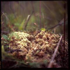 Swamp (valentine_lysyuk) Tags: mediumformat slide ukraine velvia fujifilm mf 28 fujichrome f28 100f україна vega12 салютс вега12 saliutc