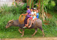 Happy Filipino children riding carabao (water buffalo), Biliran, Philippines (Darius Travel Photography) Tags: smile smiling kids children happy philippines riding filipinas waterbuffalo pilipinas carabao  vaikai    bubalusbubalis    filipinai buivolas