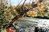 Milkweed in Fall (Georgie_grrl) Tags: autumn trees ontario beautiful river gorgeous sunny pentaxk1000 milkweed pods rougepark rikenon12828mm hangingoutwithmrmondo takinginsomenature