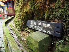 2015-10-25 11.13.23 (pang yu liu) Tags: travel 10 oct 阿里山 旅遊 alishan 2015 十月