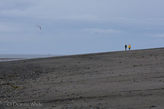 Beach Stroll (xTexAnne) Tags: sea seascape mountains beach water alaska walking landscape seaside sand shore surfboard homer seashore scerene nikond7100 diannewhite