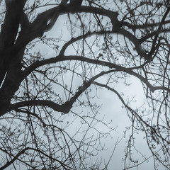 gloomy (jojoannabanana) Tags: trees silhouette square shadows gloomy branches squareformat melancholy canonpowershot s100 3652015
