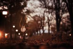 晩秋の街路樹 (のの♪) Tags: 紅葉 秋 dd 並木 夜 dollfiedream