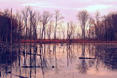 Mirror mirror. (Joseph Skompski) Tags: reflection reflections landscape mirror crossprocess maryland winner mirrorimage calvert calvertcliffs matchpoint calvertcliffsstatepark t484 calvertmd