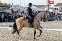 JCC_9644 (Chaudiere J) Tags: horse fair feira breed cavalo lusitano goleg 2015 feriadocavalogoleg