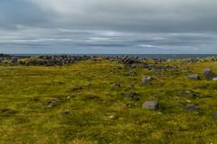 Windy Iceland (fabrizioboni00) Tags: sea panorama ice canon iceland mare wind north erba artic prato nord vento 6d penisola islanda canon6d