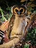 20161231-IMG_5030 (stringer8247) Tags: owl forest harajuku tokyo japan