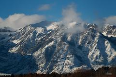 9 Swans A (jpeder55) Tags: jackson xt2 cold fujifilm grandtetonnationalpark jpedersenphotography landscape nature winter wyoming