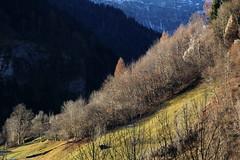 In luce (lincerosso) Tags: montagnamountains paesaggiomontano mountainscape valdizoldo soffranco autunnoinoltrato luce boschi prati bellezza armonia