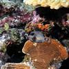 Definitly the cutiest of the ocean (Wim Bollein) Tags: trunkfish fish animal scuba diving divingparadise bonaire dutchcaribbean caribbean bluewaters ocean underwater underwaterparadise