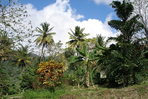 Soufriere, St. Lucia (Karibik) - Diamond Botanical Gardens