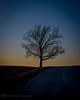 My favorite tree at the park (d_russell) Tags: tree sky shawneemissionpark johnsoncountyks kansas kansascity canon5dmarkiii ef24105mmf4 sundown road