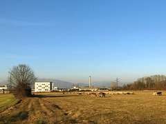(Paolo Cozzarizza) Tags: italia lombardia bergamo filago animale pecora asino alberi panorama
