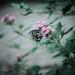 <I (Samantha Nicol Art Photography) Tags: