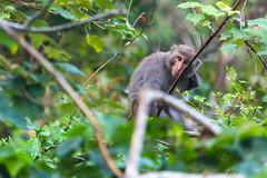 20170313Monkeys-02 (wang_6834) Tags: 猴子