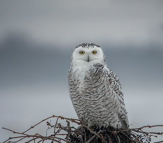 Female Snowy out in the fog and rain