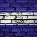 National Flag of El Salvador on a Brick Wall
