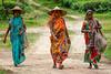 Tea Estate, Srimongal, Bangladesh (Travelling Rats) Tags: bangladesh srimongal bestofbangladesh