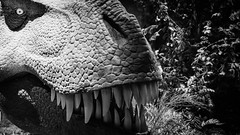 Hungry (Mark Grant-Jones) Tags: bw holiday nikon cornwall dinosaur wildlife edenproject exhibition eden nikkor trex carnivore triceratops tyrannosaur fav10 d810