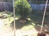 20150919_113556 (mjfmjfmjf) Tags: oregon zoo 2015 greatcatsworldpark