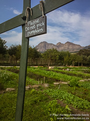 Please do not pick pumpkins at Babylonstoren Wine Estate, Franschhoek