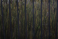 """"" (Marcus Yau) Tags: abstract lines reeds highcontrast symmetry"