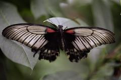 Butterfly Portra 3 (martin.timc) Tags: leica 2 50mm minolta kodak ii 5400 konica f2 portra r7 160 elpro summicronr