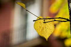 Fall in town (Flix Prez Antn) Tags: pentax bilbao euskadi k5 pasvasco