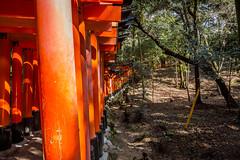 Gates As Far As The Eye Can See (-Astin-) Tags: trip travel vacation japan kyoto trips shrines fushimiinari toriigate canon7d tokina111628